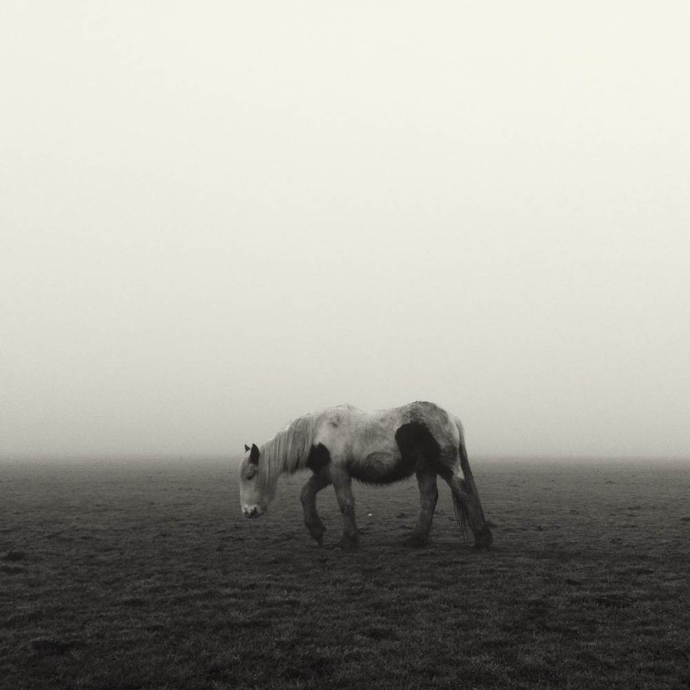 vsco iphone photography - horse on lincoln west common